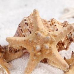 2Pcs természetes csillag tengeri csillag Shell akvárium táj készítése kézműves DIY dekoráció