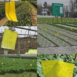 5 db 5PCS kültéri sárga ragacsos ragasztó Repülő pesti rovar papírok Csapdák fogók Bugs