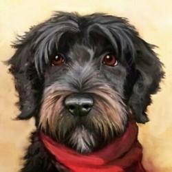 DIY kutya gyémántfestő készlet 5D gyémántfestéssel, kit kit készítve