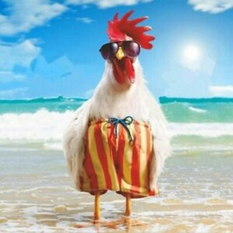 Free Rooster Pictures to Print | prints more from scribble14 view gallery view prints.