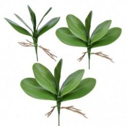 Művirág, Phalaenopsis levelei (lepke orchidea), levél / zöld (gree H6J8