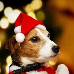 Nincs szín - Kisállat macska kutya kiskutya Santa Red Hat karácsonyi ruhák jelmezek meleg ruházat