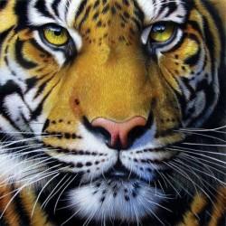 Nincs szín - Gyémántfestő készletek Tigris teljes körű fúró kézműves otthoni művészet (B2315)