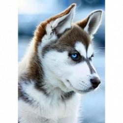 5 * kutya - Nx071-30 * 40cm - Teljes körű fúró gyémántfestés 5D DIY kutya strasszos állati mozaik dekoráció
