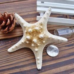 Nincs szín - 2db természetes tengeri csillag tengeri csillag kagyló akvárium táj dekoráció készítés DIY kézműves